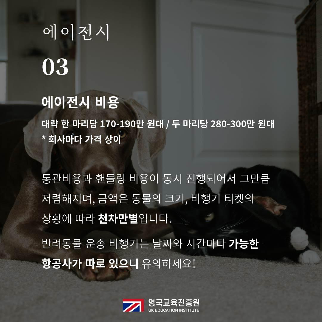 반려동물 영국입국 (16).jpg