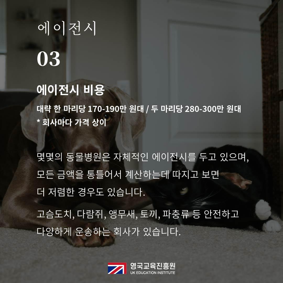 반려동물 영국입국 (17).jpg