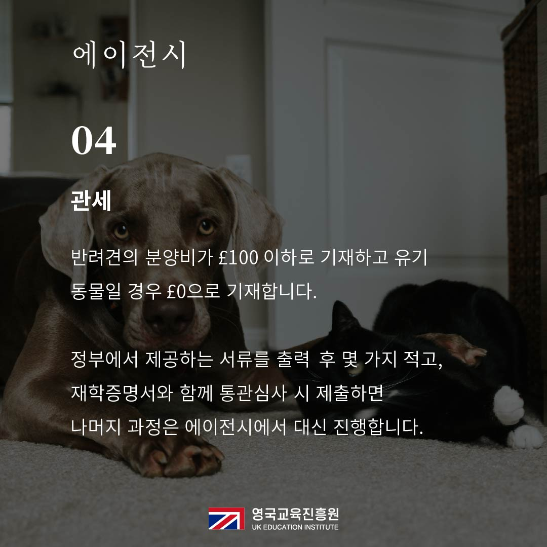 반려동물 영국입국 (19).jpg