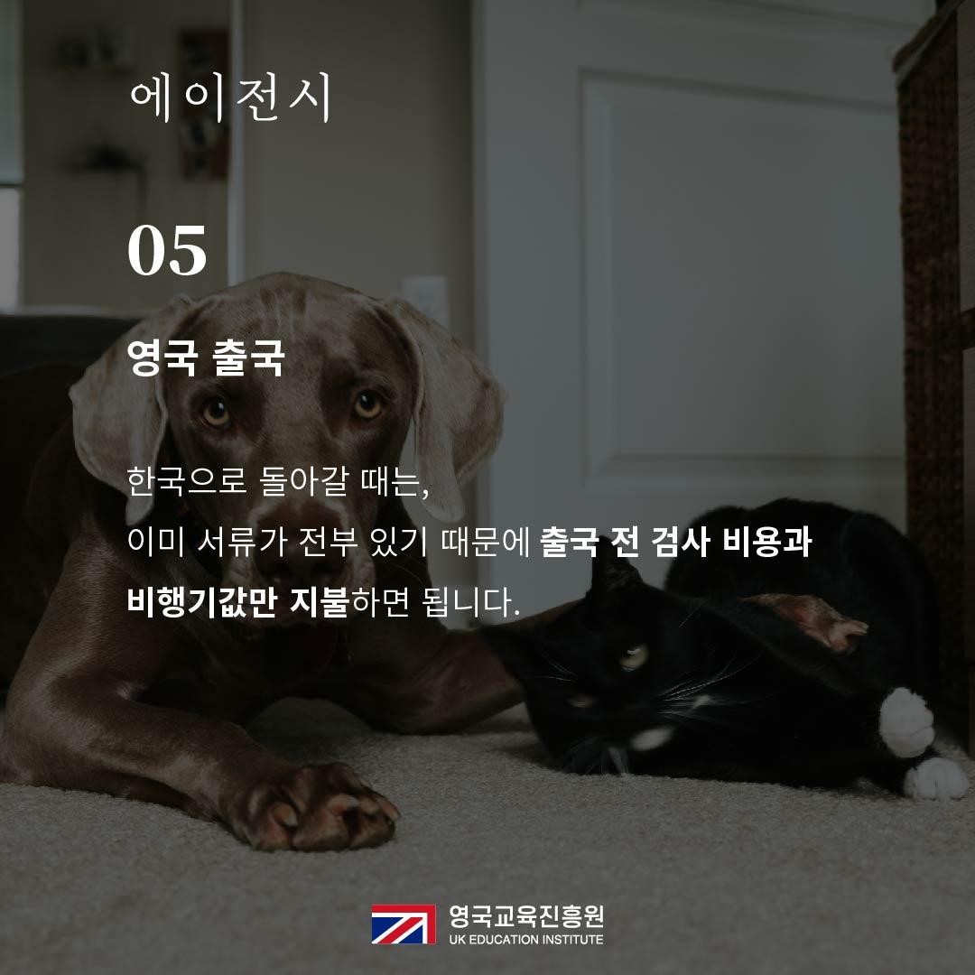 반려동물 영국입국 (20).jpg