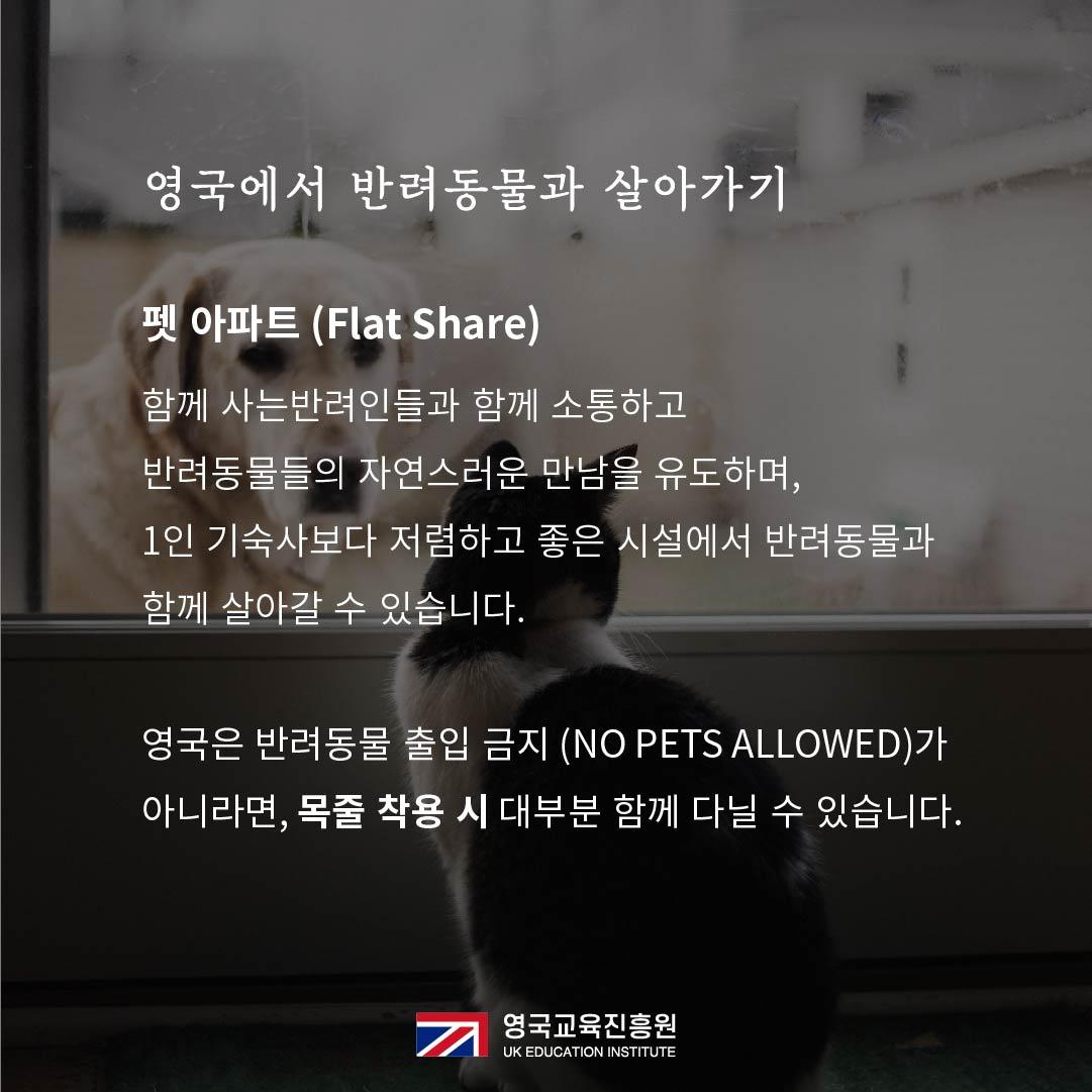 반려동물 영국입국 (21).jpg