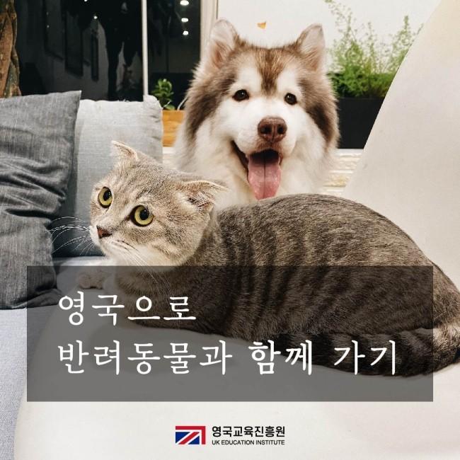 반려동물 영국입국 (1).jpg