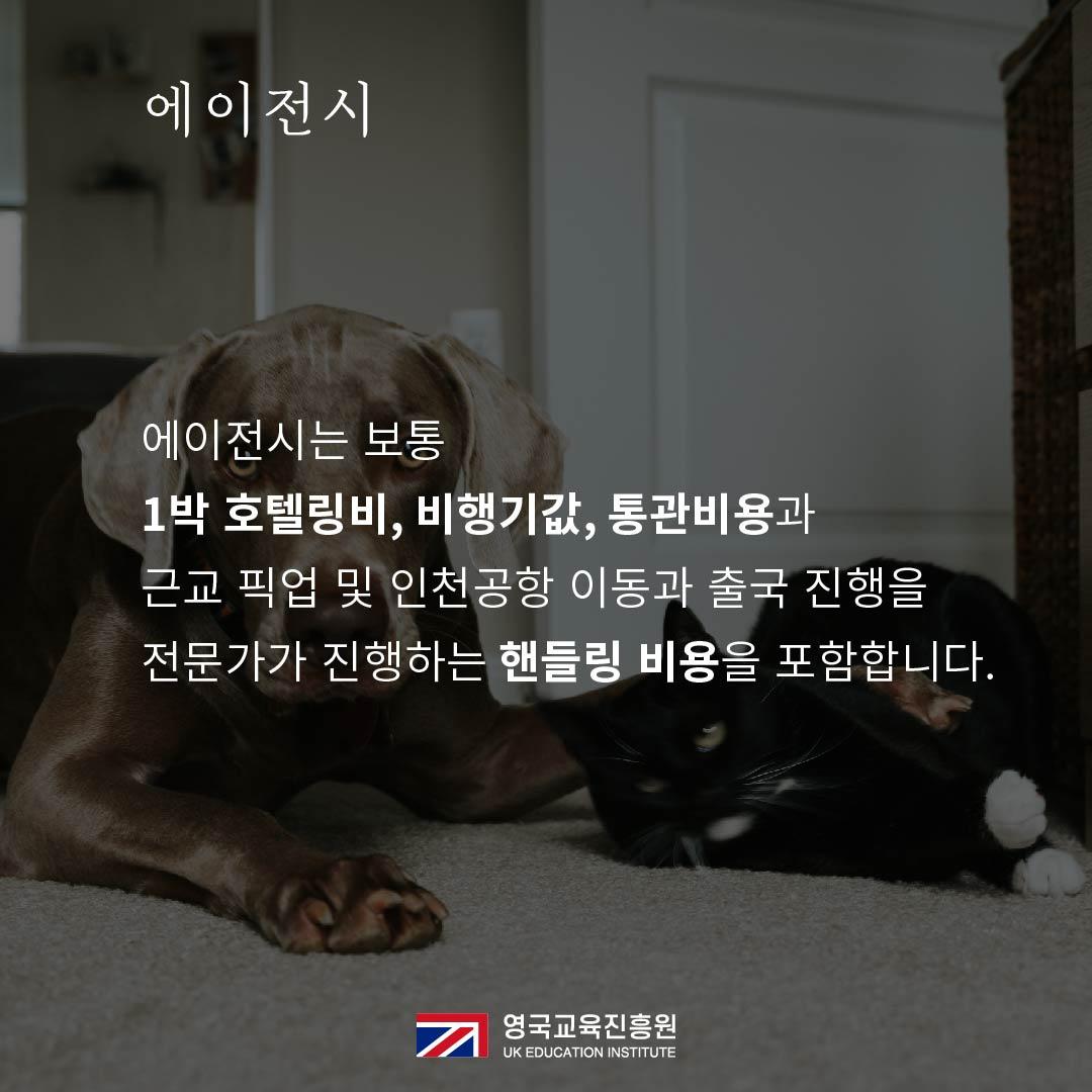 반려동물 영국입국 (12).jpg